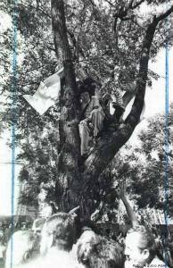 Dayrell e seus colegas na árvore em plena ditadura militar - Foto: Arquivo AGAPAN