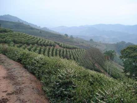 Estudo da Seapa aponta que o café é o principal produto de exportação do agronegócio mineiro