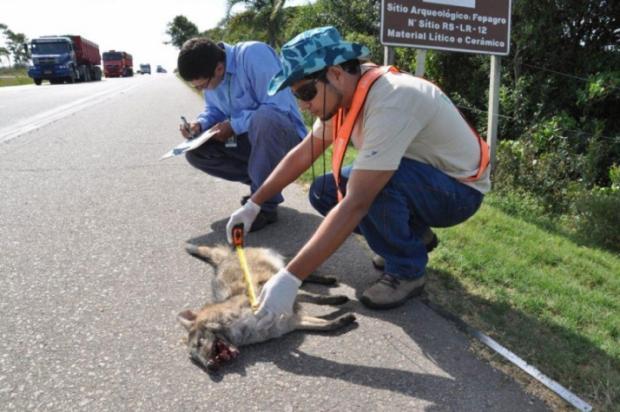Aplicativo para celular é ferramenta para evitar atropelamento de animais