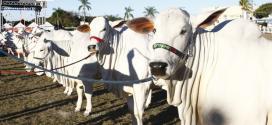 Norte de Minas - Expomontes fomenta agronegócio no Norte de Minas