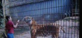 Visitantes gravaram menino em local proibido do zoo