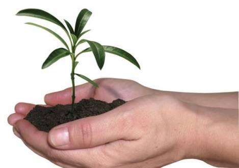 Montes Claros - Prefeitura comemora Dia da Árvore com blitz ecológica e distribuição de mudas