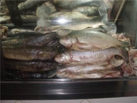 Campanha promete reduzir preço de peixe em até 40%
