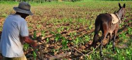 Montes Claros - Município adquire alimentos de pequenos agricultores para compor a merenda escolar