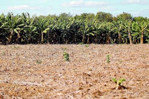 Norte de Minas - Falta de água faz a produção de Janaúba e região cair 20%