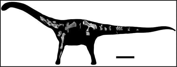 Fóssil achado na Tanzânia revela nova espécie de dinossauro gigante