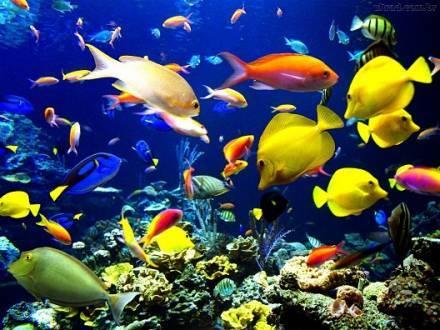 Aquecimento global levará espécies de peixes aos polos