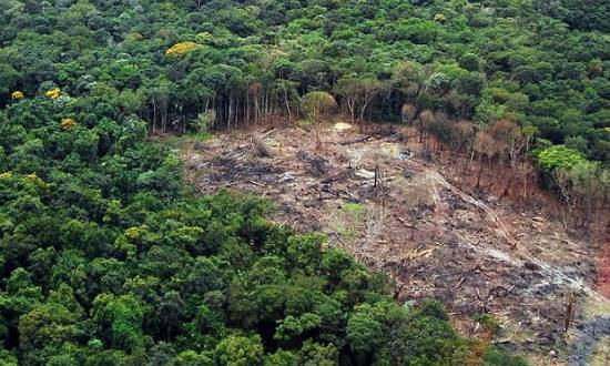Estudo abordou todas as florestas tropicais do planeta, com foco especial na Mata Atlântica e na Amazônia