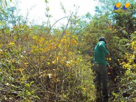 Norte de Minas - Ruralminas agiliza inventário florestal no Jaíba e gera economia de R$ 2 milhões
