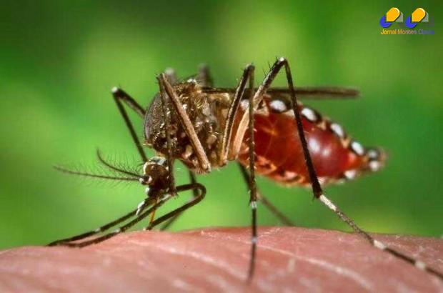 Montes Claros - CCZ em guerra contra a Dengue e Chikungunya