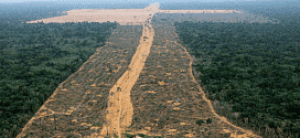 Brasil - Em dois meses o desmatamento na Amazônia cresce 122%