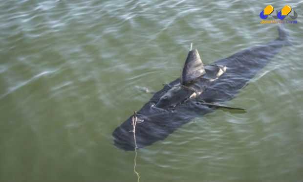 Com tamanho e forma semelhante, drone será um espião no fundo do mar.