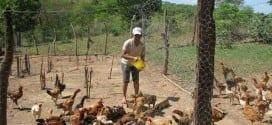 MG - Emater de Minas ajuda a tirar milhares de famílias da miséria