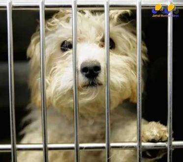 Brasil - Exposição de animais em vitrines e gaiolas é proibida