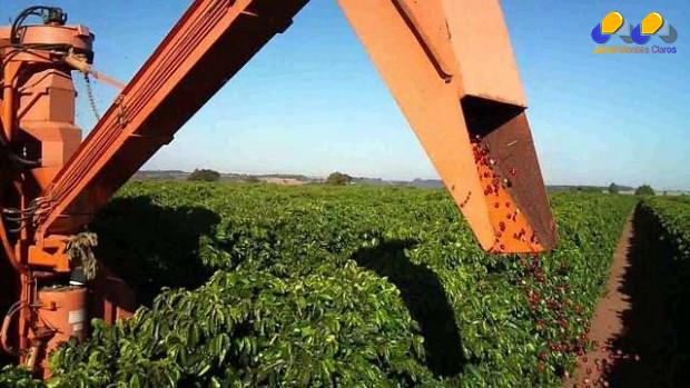 Norte de Minas se prepara para a colheita do Café do Cerrado