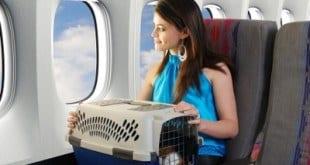 Clientes da GOL já podem viajar com seus animais de estimação na cabine de passageiros