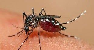 MG - Até maio, casos de dengue em Minas Gerais já igualam a todos os de 2014