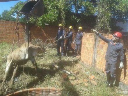 Norte de Minas - Vaca é resgatada de buraco pelos Bombeiros em Januária