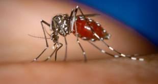 MG - Chega a 16 o número de mortes provocadas pela dengue em Minas Gerais