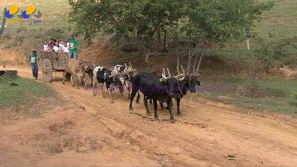 Agricultora de Minas Gerais transforma fazenda centenária em museu rural