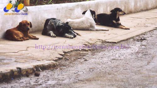 Montes Claros - CCZ de Montes Claros vai castrar animais abandonados em Montes Claros