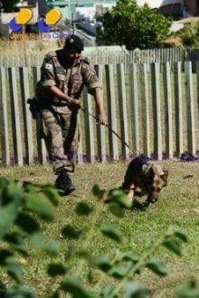 Tenente Jadir e seu cão Áthyla encontraram dinheiro escondido por bandidos