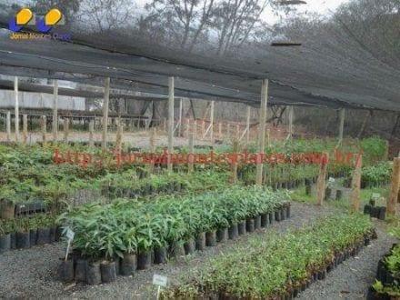 FENICS 2015 - Mais de 500 mudas serão plantadas para compensar a emissão de gás carbônico produzido a partir da feira