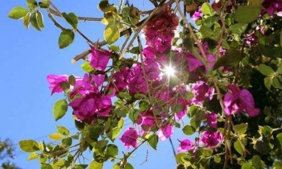 O início da primavera é quando ocorre o segundo equinócio do ano: quando o dia e a noite têm a mesma duração