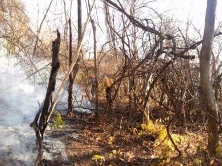 Montes Claros - Força tarefa combate fogo nos parques Lapa Grande e Sapucaia Foto: CBMMG