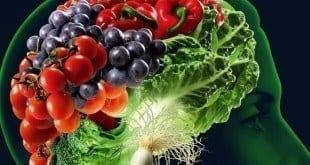 Saúde - 5 Alimentos que contribuem para o bom funcionamento do cérebro