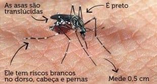 Três cidades mineiras em risco e mais 53 em alerta para dengue, chikungunya e zika
