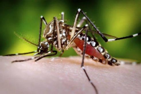MG - Casos confirmados de dengue em Minas Gerais triplicam em 2015