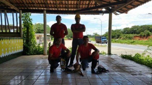 Montes Claros - Bombeiros resgatam cadela que lutou contra a morte em uma cisterna de 20 metros às margens da BR-251