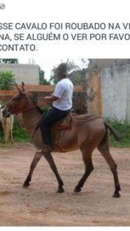 Montes Claros - Mula de 8 anos desaparece misteriosamente na Vila Guilhermina