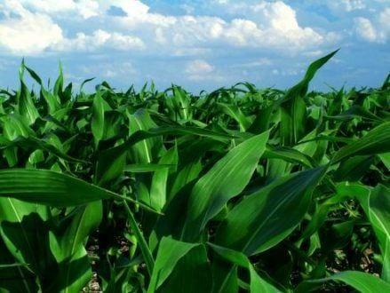 Aplicativo inédito no país para coleta de dados agrícolas no semiárido será apresentado em Montes Claros