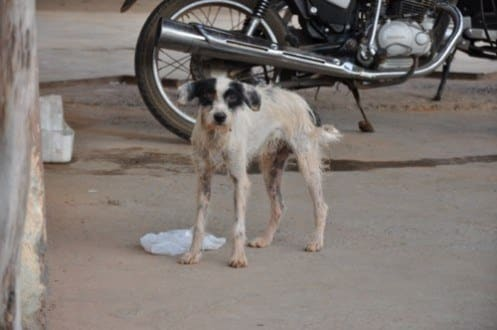 Montes Claros - Prefeitura licita equipamentos para controle da população canina de Montes Claros