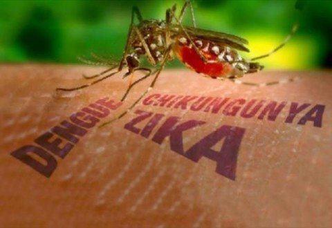 No Brasil, casos de dengue sobem 48% em janeiro