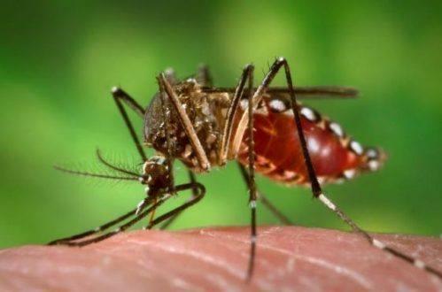 Montes Claros - Zika vírus causa preocupação em Montes Claros