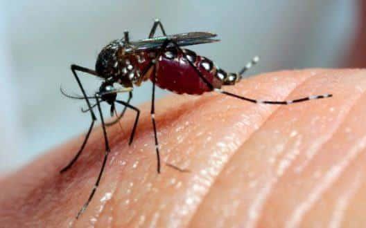 MG - Minas Gerais tem 62 mortes por dengue