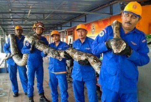 A cobra morreu no domingo (10) por razões desconhecidas, embora tenha tido tempo de colocar um ovo
