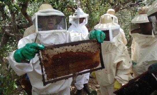O curso terminou em um apiário na comunidade Santa Maria, com a prática dos assuntos abordados