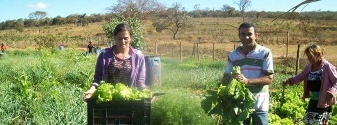 Com o apoio técnico da Emater-MG, famílias trabalham em horta comunitária em São João da Lagoa, no Norte de Minas Gerais