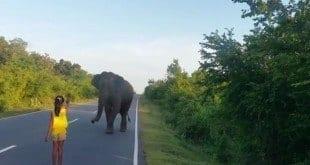 Garotinha usa a palma da mão para afugentar elefante no Sri Lanka; veja