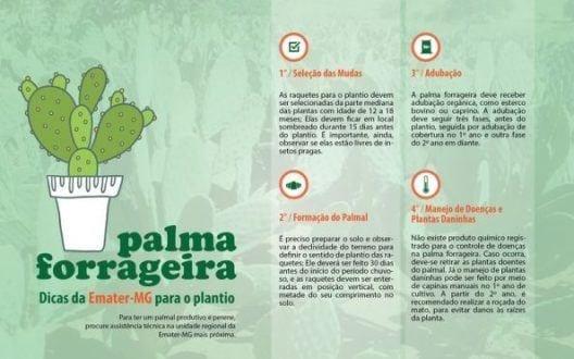 content_palma3