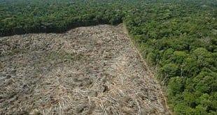 Novos números mostram que desmatamento na Amazônia aumentou 29%