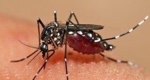 MG - Casos de dengue aumentam seis vezes em apenas uma semana em Minas