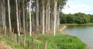 """Norte de Minas - Primeiro Seminário """"Instituição de Associação de Municípios de Base Florestal e Energética"""""""