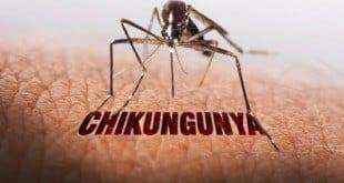 MG - Casos de chikungunya disparam em Minas Gerais