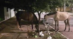 """Nas redes sociais moradores fazem piadas sobre cavalos serem a nova alternativa encontrada pela gestão atual na """"coleta"""" de lixo"""