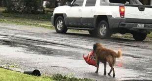 Após furacão, cachorro é fotografado carregando saco de ração
